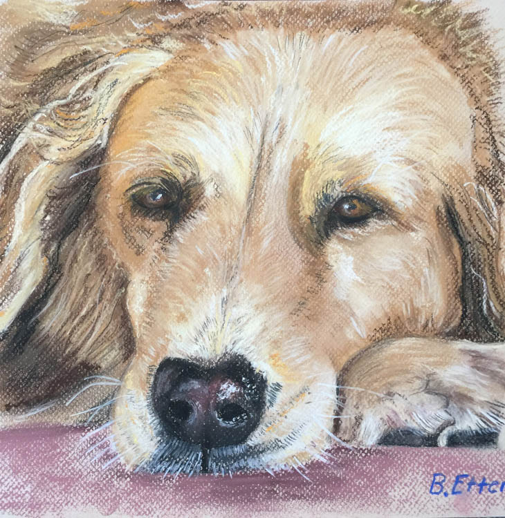 Pet Portrait Tasmania