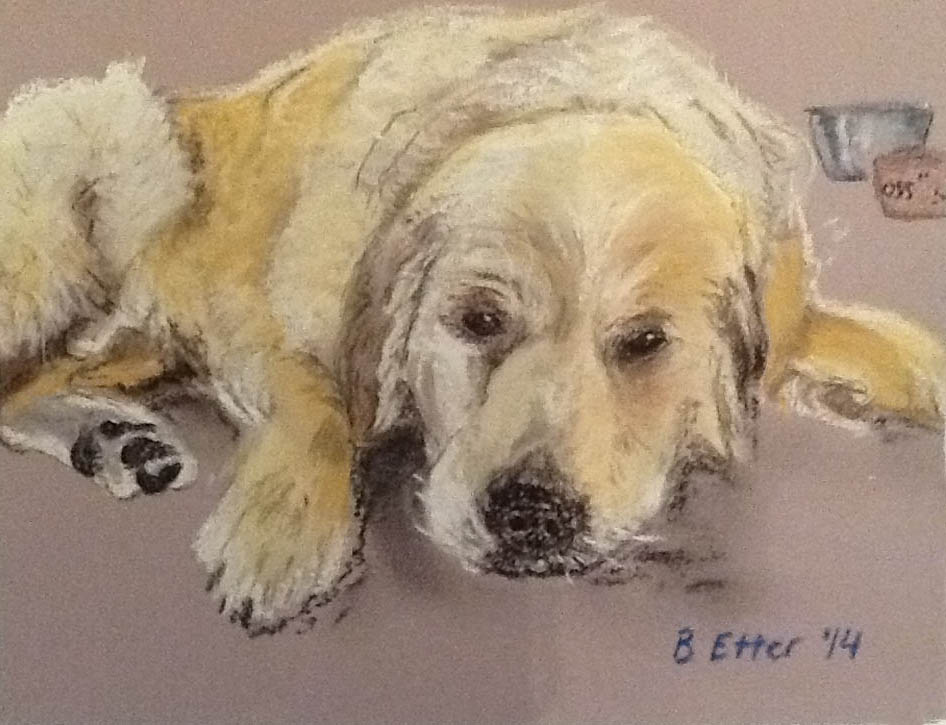 Dog Portrait Hobart
