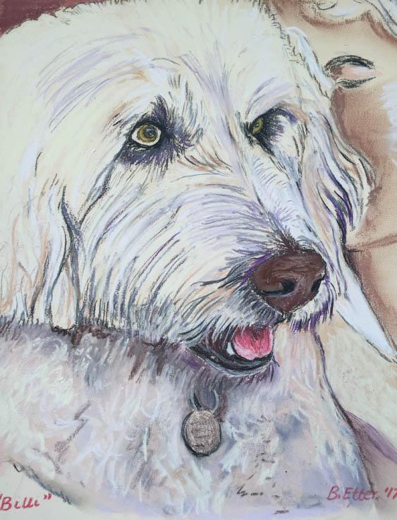 Animal Portrait Tasmania