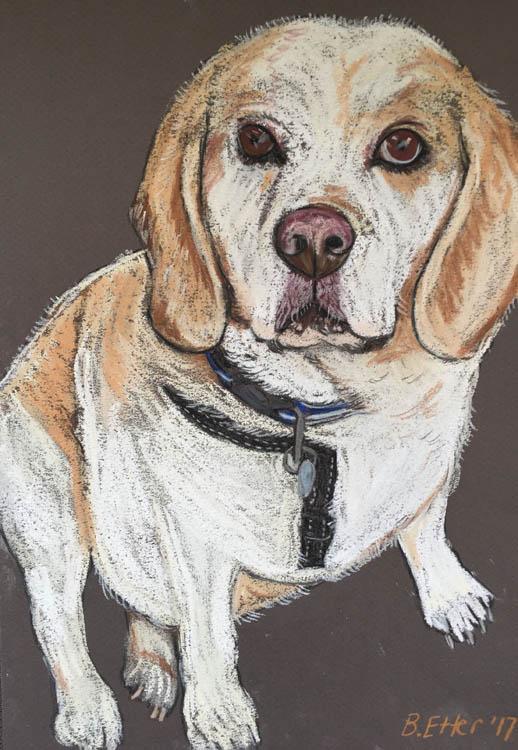 Henry beagle Portrait