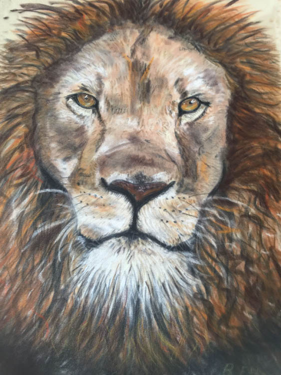 Lion in pastel on velour