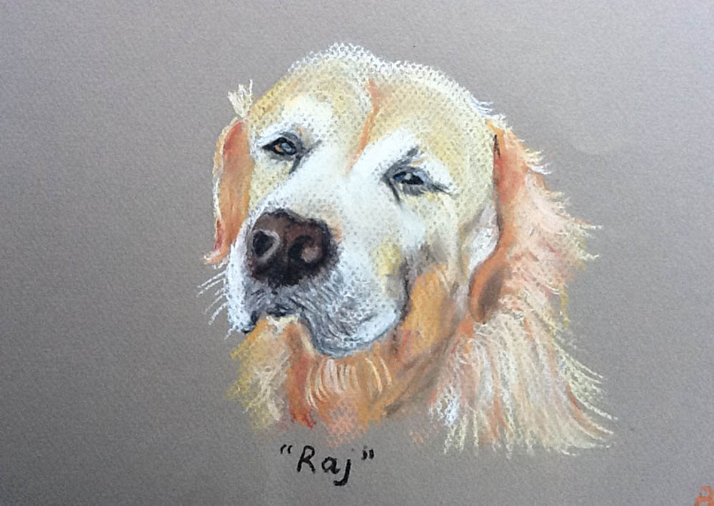 Retriever in Pastel