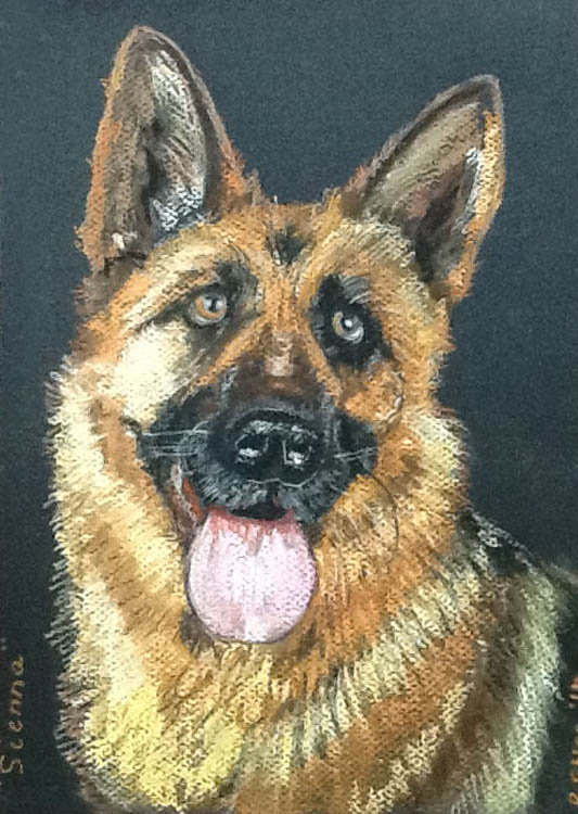 German Shepherd In Pastel