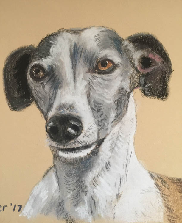 Woodie the Whippett portrait