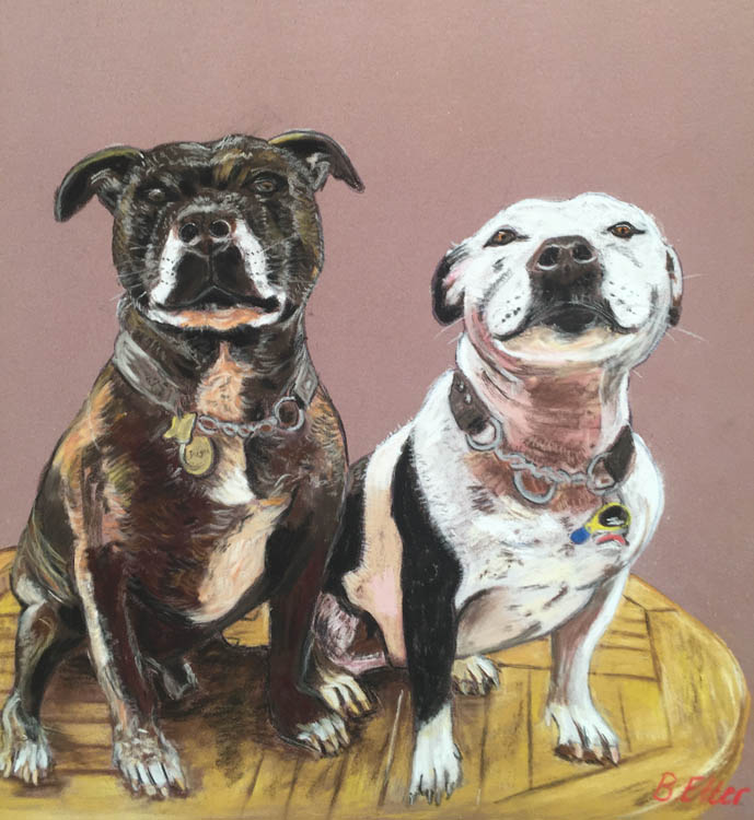 staffies pet portrait